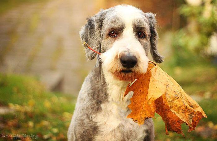 Собака и осень