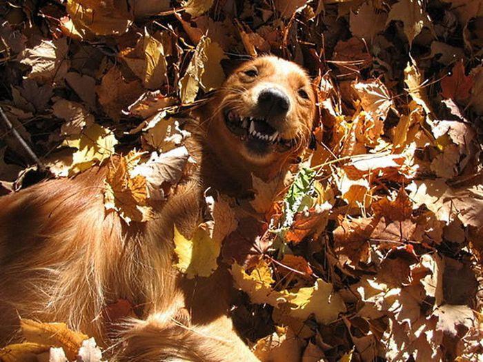 Осенняя фотосессия с собаками в главной роли