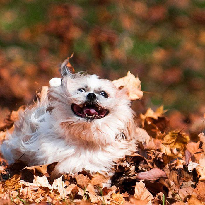 Собака в движении