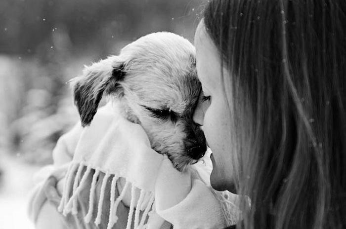 Фотосессия собак с хозяевами