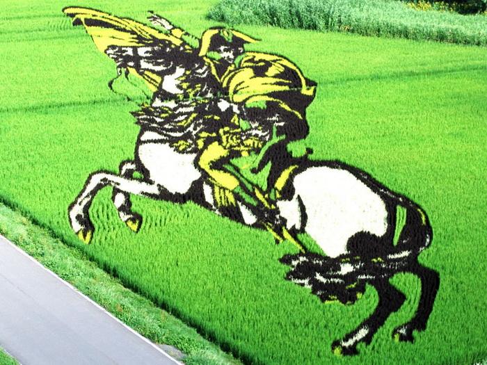 Картины на рисовых полях Японии: лэнд-арт в действии