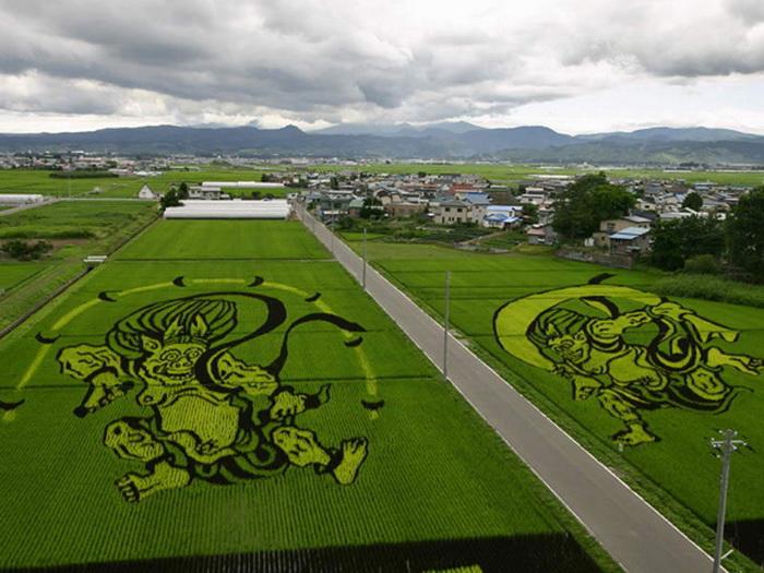Лэнд-арт на рисовых полях Японии
