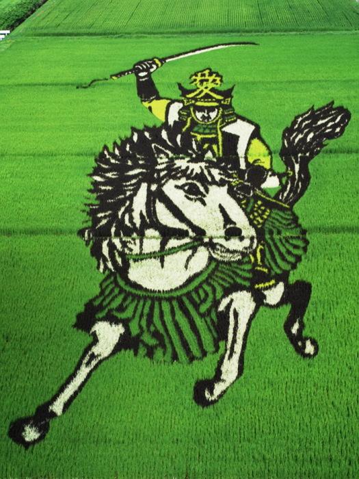 Удивительные картины на рисовых полях Японии