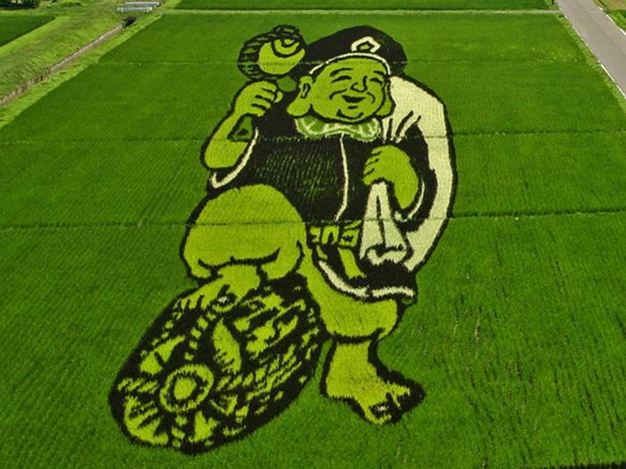 Картины на рисовых полях Японии: лэнд-арт