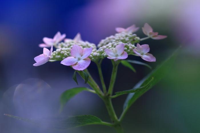 Фото цветов макросъемкой