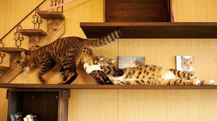 Ми-мишные котики. Akimasa Harada