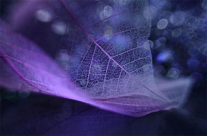 Чудеса макросъемки от фотографа Shihya Kowatari