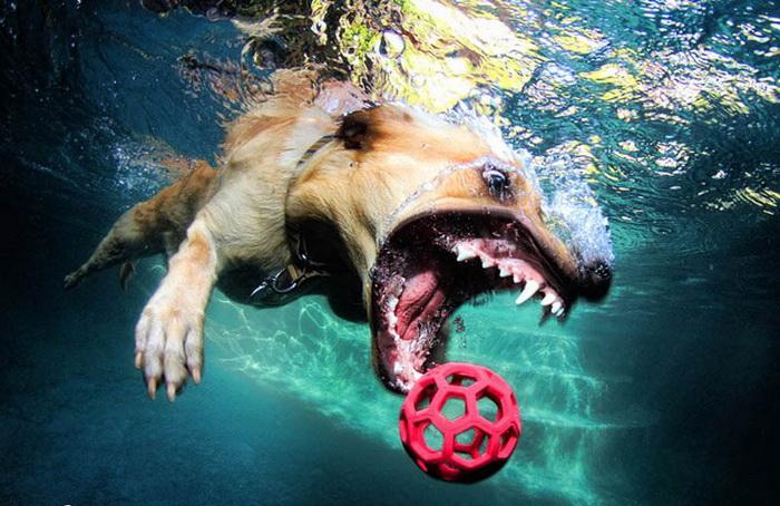 Underwater Dogs: собаки под водой