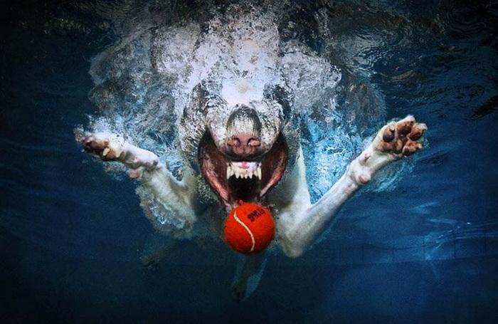 Собаки под водой: Underwater Dogs
