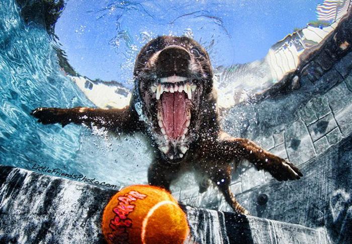Коллекция снимков Underwater Dogs