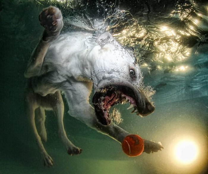 Фотографии собак под водой
