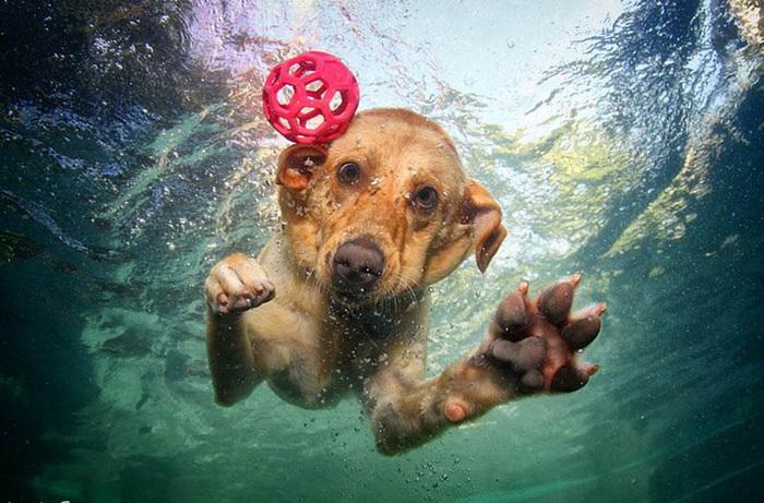 Underwater Dogs: как собаки ведут себя под водой