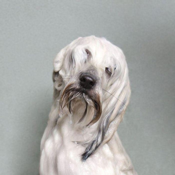 Мокрые собаки в коллекции фотографа Sophie Gamand