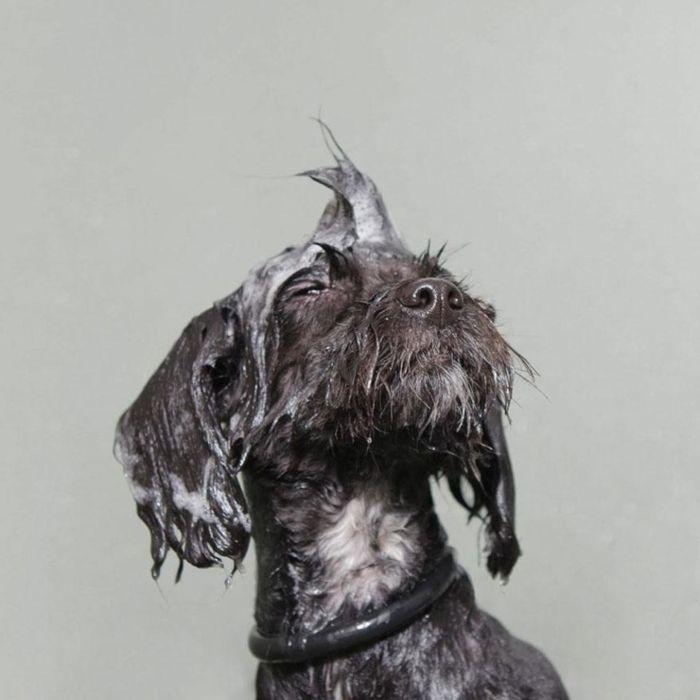 Необычные мокрые собаки от Sophie Gamand