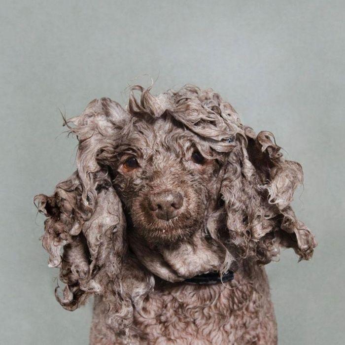 Мокрые собаки от фотографа Sophie Gamand