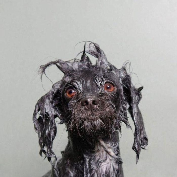 Собаки после водных процедур