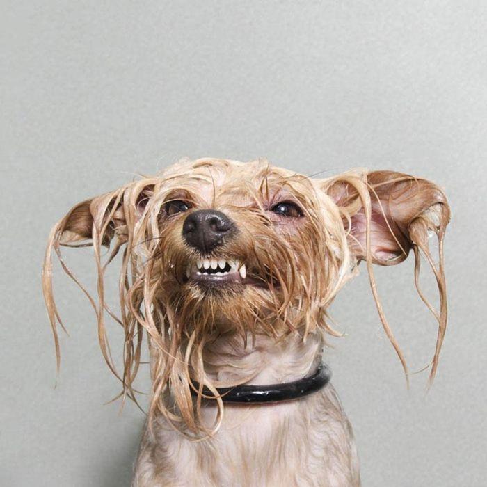 Мокрые собаки в фотосессии Sophie Gamand