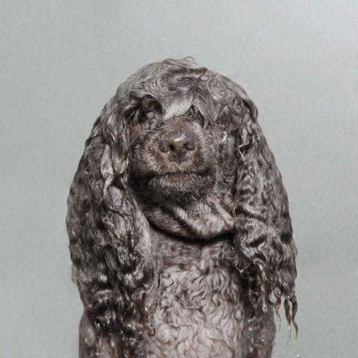 Фотосессия Мокрые собаки от Sophie Gamand