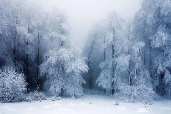Фотограф Evgeni Dinev