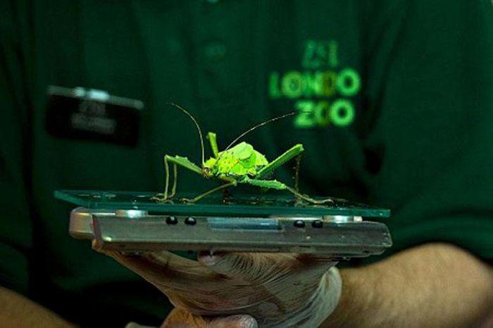 Весы для насекомых
