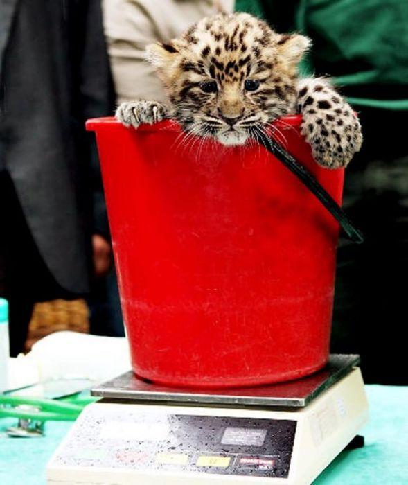 Как узнают вес животных: фоторепортаж из зоопарка