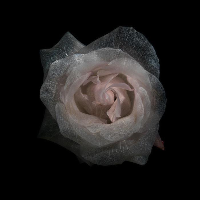 Подводные цветы Александра Джеймса (Alexander James)
