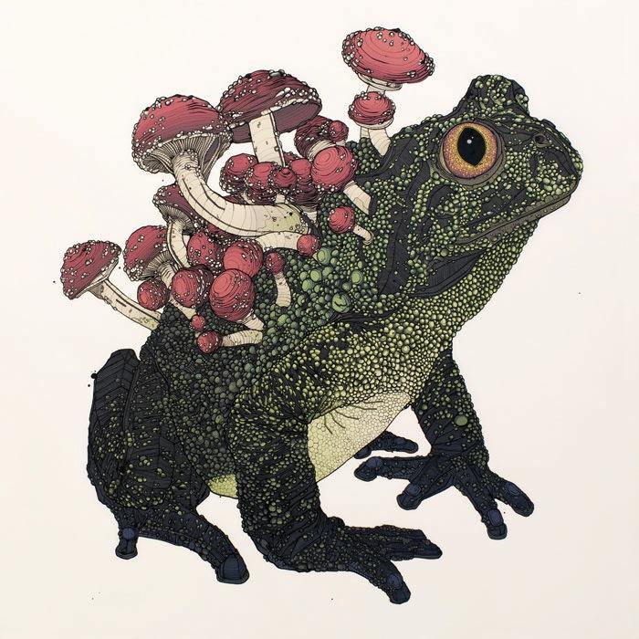 Николя Ди Женова: Cordyceps Toad