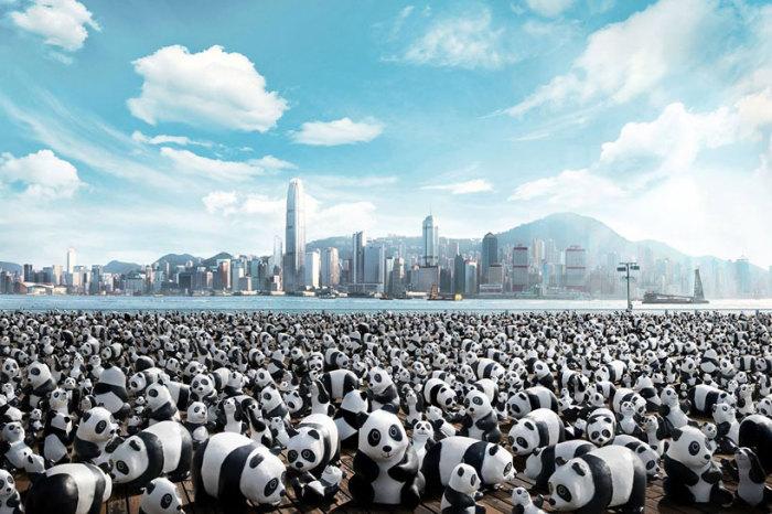 «Панды в турне» («Pandas on Tour») Пауло Гранжона (Paulo Grangeon)