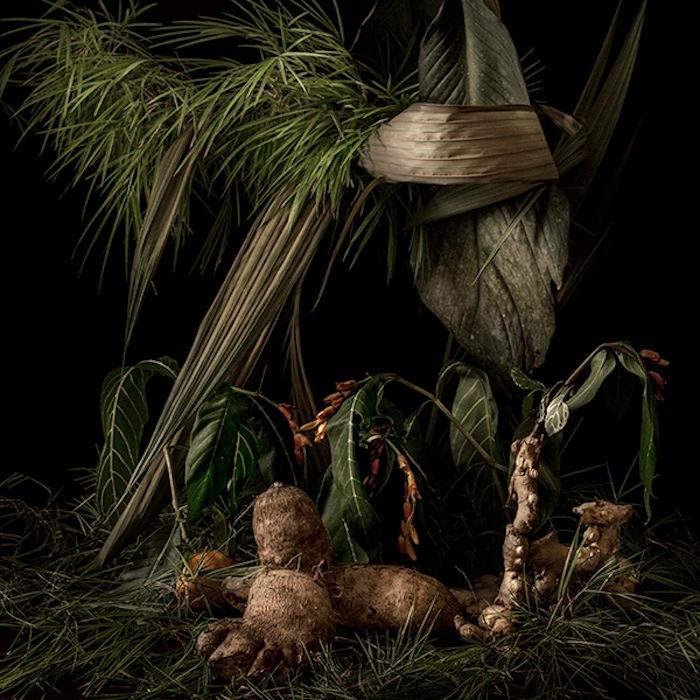 Рафаэль Д'Ало (Rafael D'Alo), Tropical Arrangements I