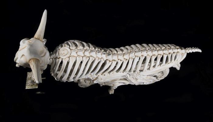 Игнатавр» (Ignitaurus), 2008. Вид сверху