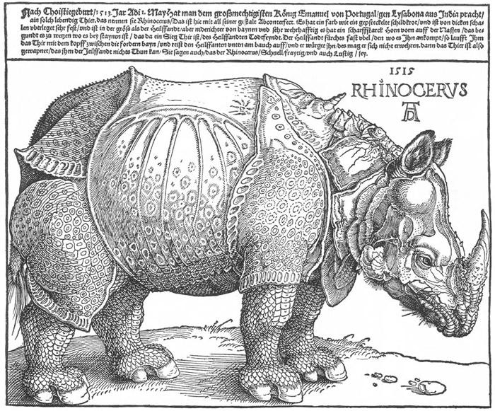 «Носорг» (Rhinocerus) — гравюра на дереве Альбрехта Дюрера