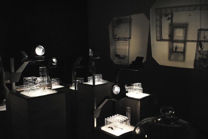 Под светом ламп 10-ти проекторов