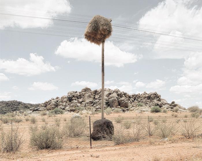 Фотограф строит композицию кадра таким образом, чтобы подчеркнуть индивидуальность объекта.