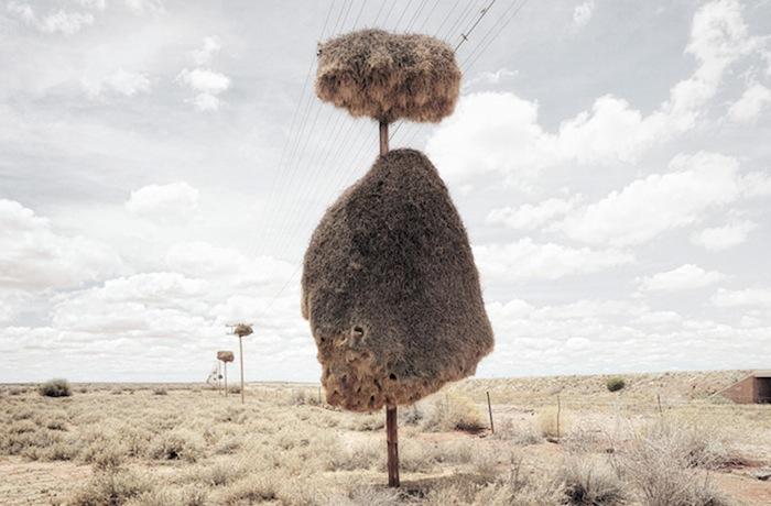 Пустынные пейзажи Диллона Марша.