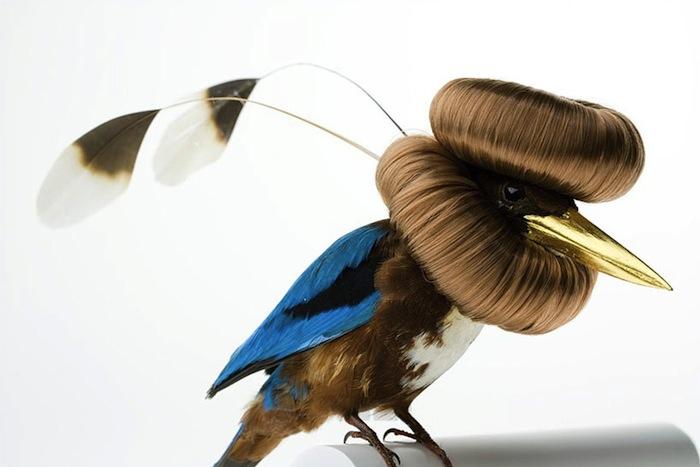 Декорированные птицы Карли Фивер (Karley Feaver), halcyon smyrnensis bunbundo, 2013