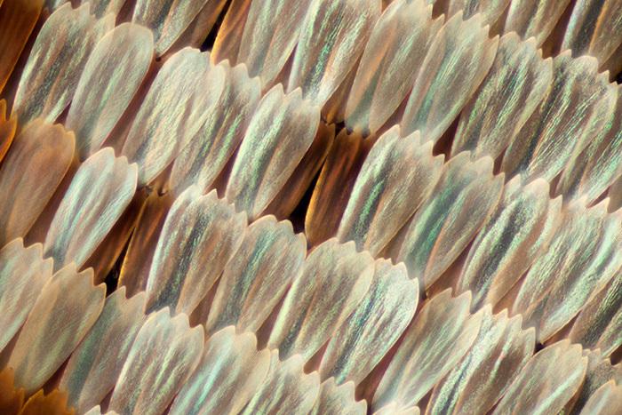 Крылья бабочек на фотографиях Линдена Гледхилла (Linden Gledhill)
