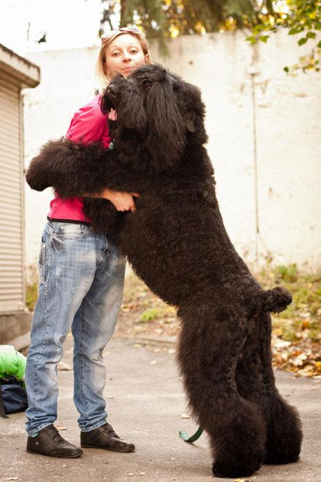 Любвеобильный пес со своей хозяйкой.