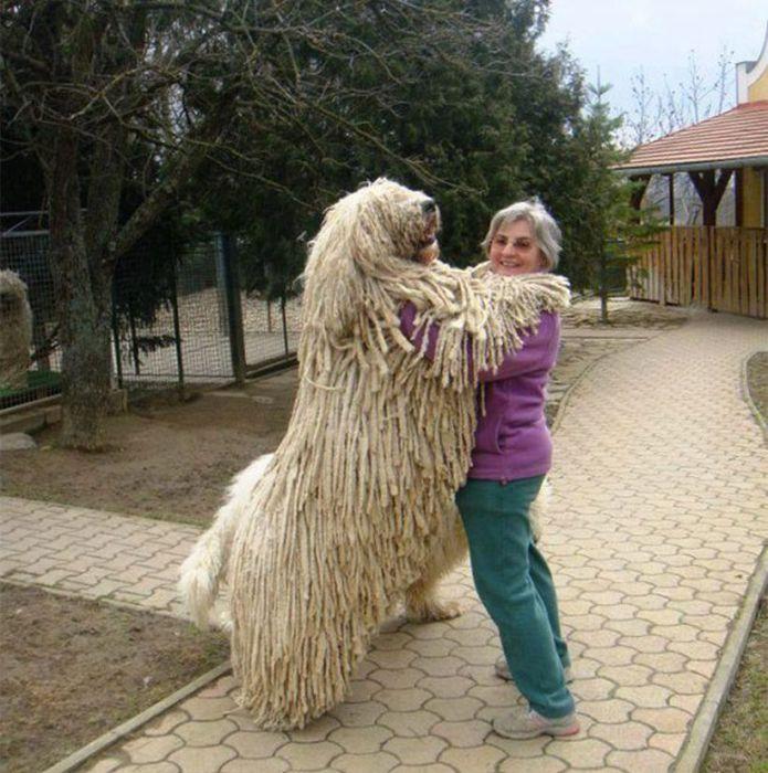Забавный большой пес обнимается со своей хозяйкой.