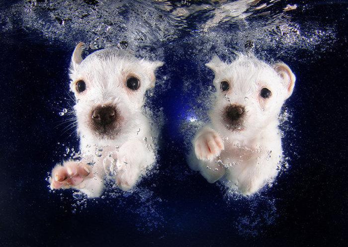 Щенки под водой на фотографиях Seth Casteel.