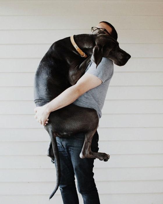 Большой уставший пес со своим хозяином.
