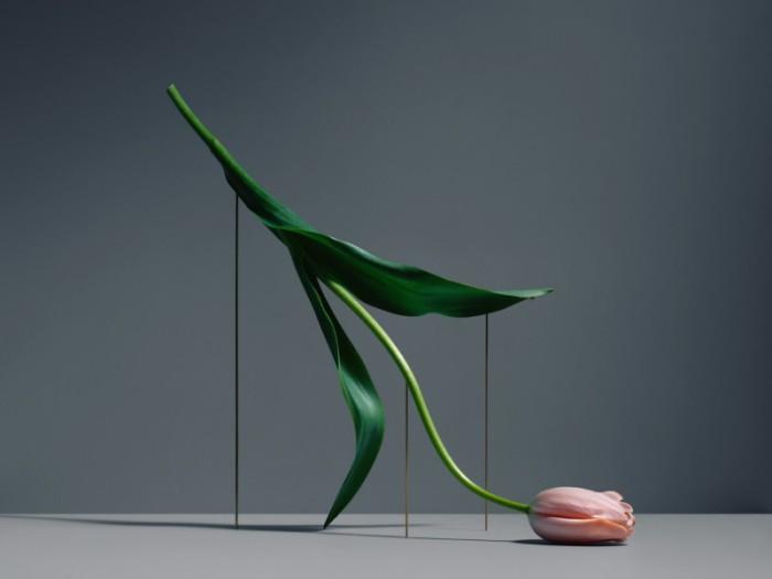 Цветочные скульптуры от Карла Кляйнера (Carl Kleiner).