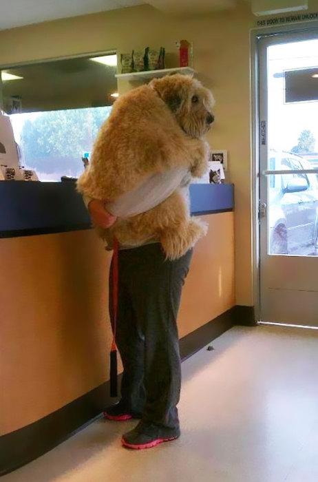 Забавный испуганный пес на руках у хозяйки.