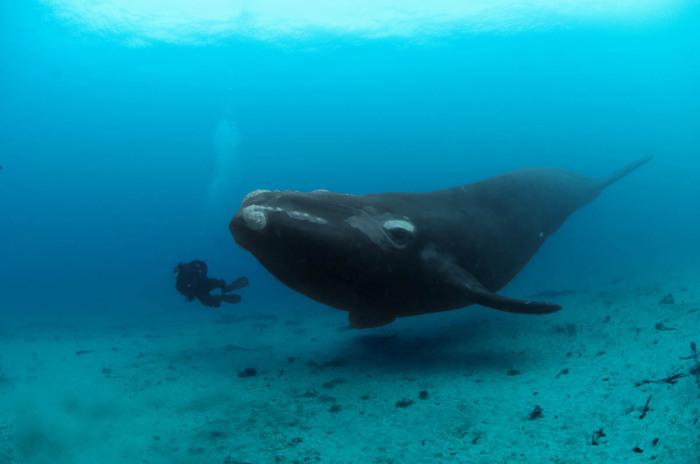 Фотоснимки гигантского кита от Брайана Скерри (Brian Skerry).