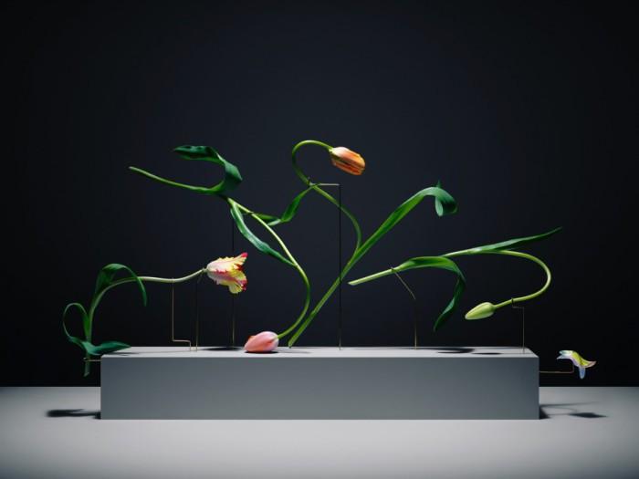 Цветочные композиции от шведского фотографа.