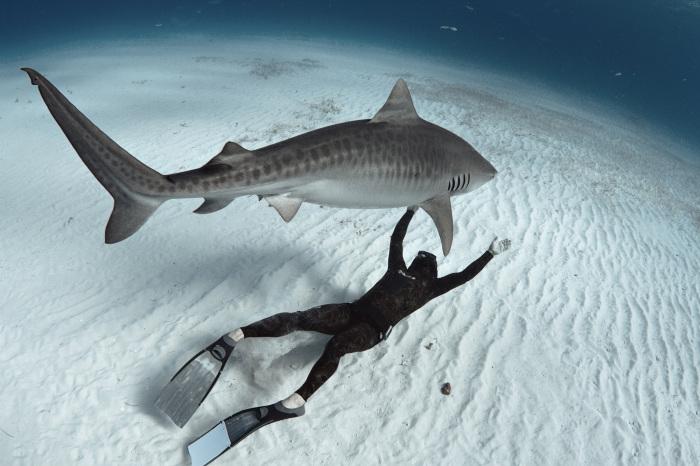 Потрясающие подводные снимки Raul Boesel.