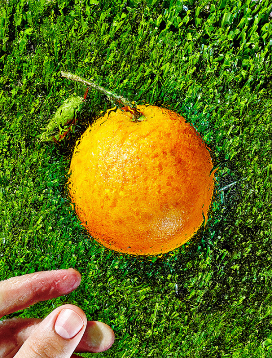 Сочный апельсин на фото от Bobby Doherty.