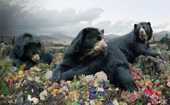Медведи на снимках от Симена Йохана (Simen Johan).