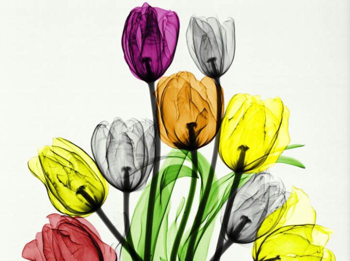 Букет тюльпанов - первая работа Arie van't Riet.