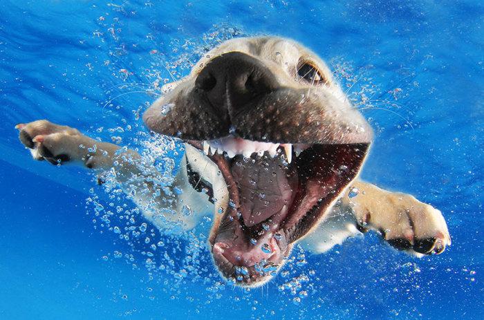 Смешные фотографии щенков под водой.