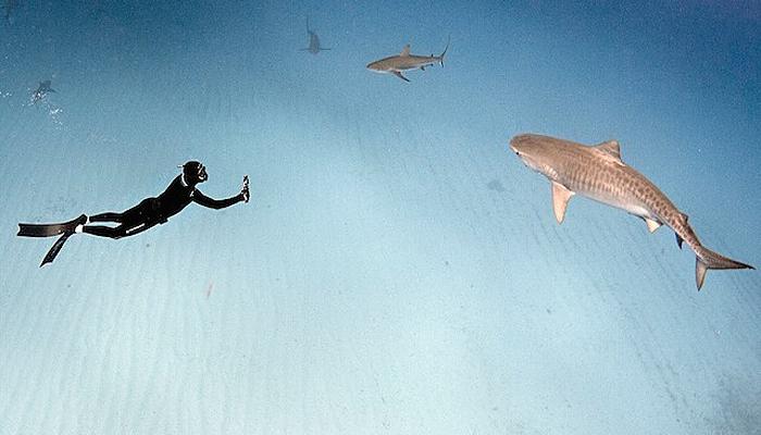 Завораживающие фотографии акул и отчаянных дайверов от Raul Boesel.